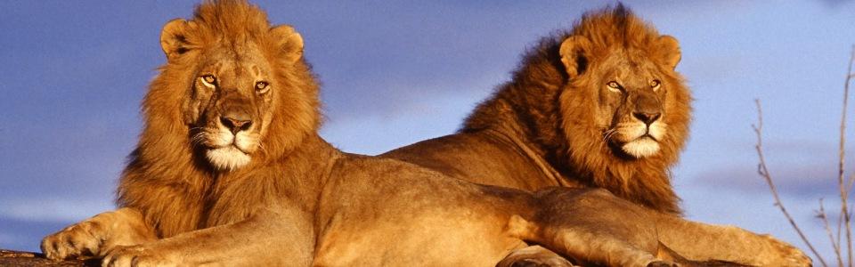 Tanzánia nagy szafari + üdülés Zanzibáron